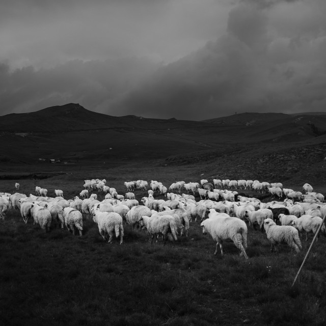 """Sheeps Path"" stock image"