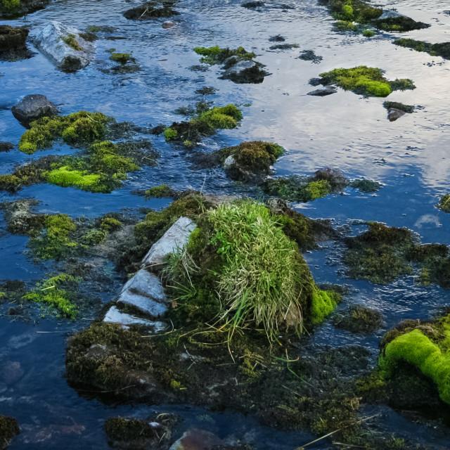 """Water Moss"" stock image"