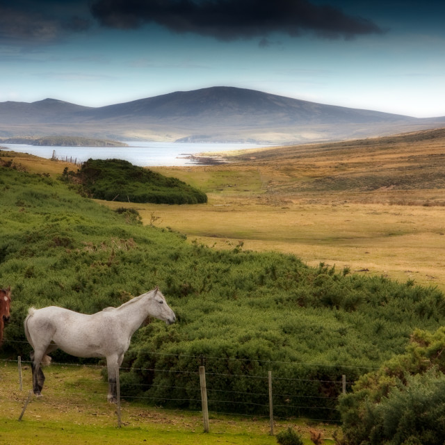 """Two horses at San Carlos"" stock image"