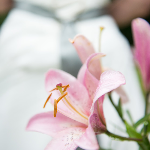 """""""Lilies and Love"""" stock image"""
