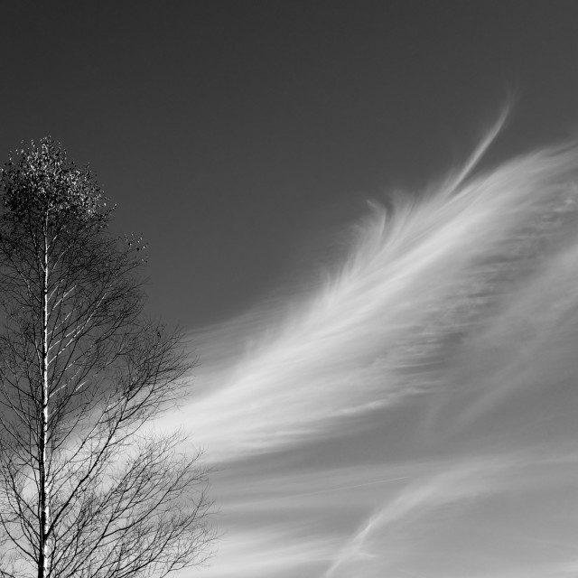 """Feathered sky"" stock image"