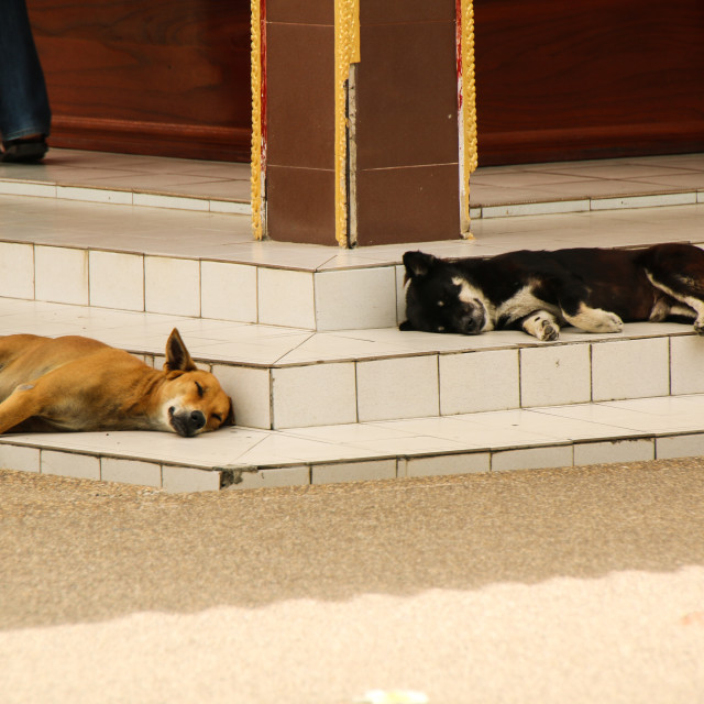 """Sleeping Dogs"" stock image"