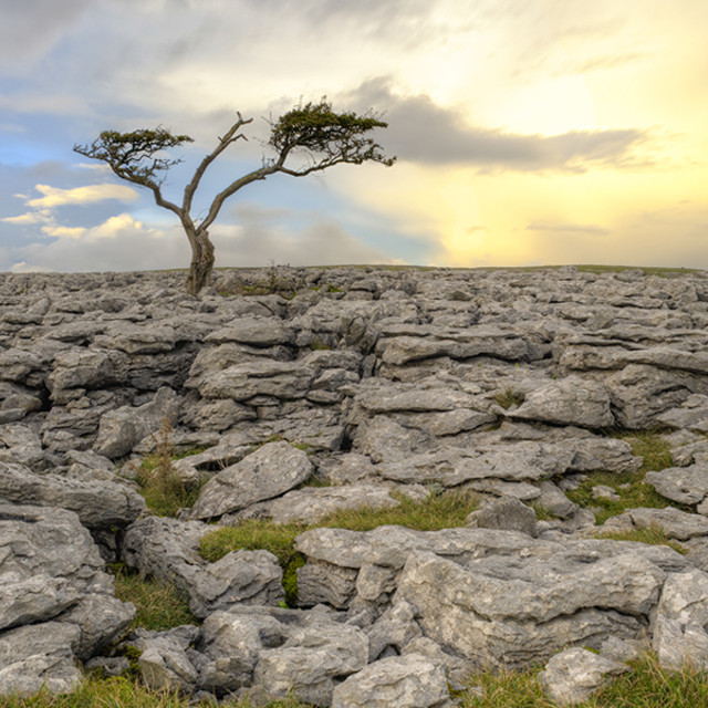 """Ingleton Tree 4"" stock image"