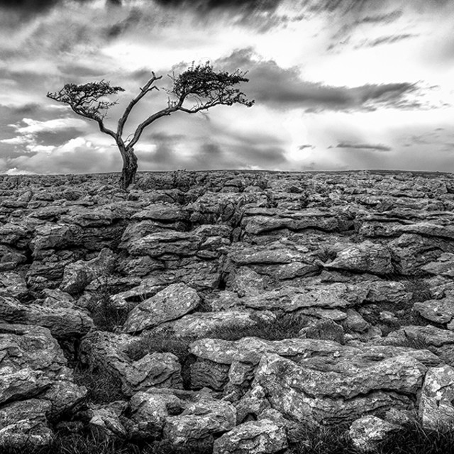 """Ingleton Tree 3"" stock image"