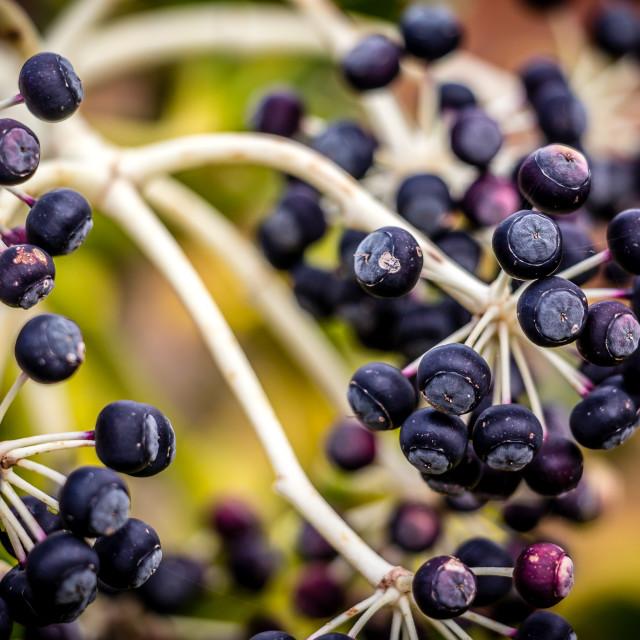 """Castor Seeds"" stock image"