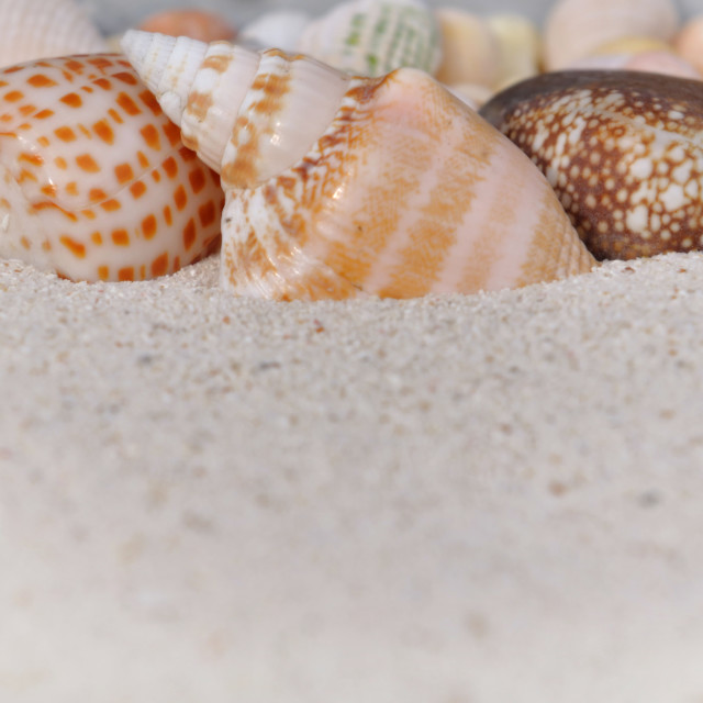 """seashells"" stock image"