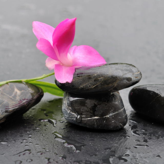 """flower on black pebbles"" stock image"