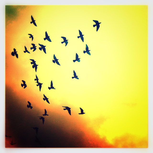 """""""Birds in flight on a yellow background"""" stock image"""