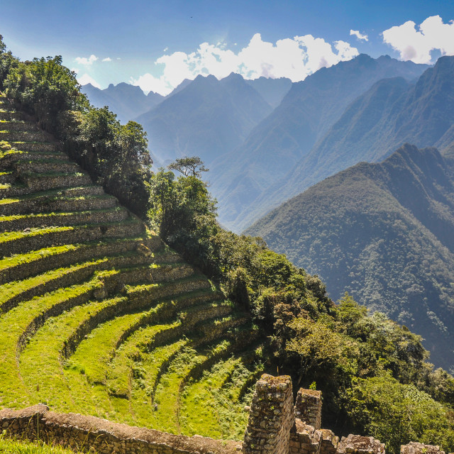 """Winay Wayna Terraces"" stock image"