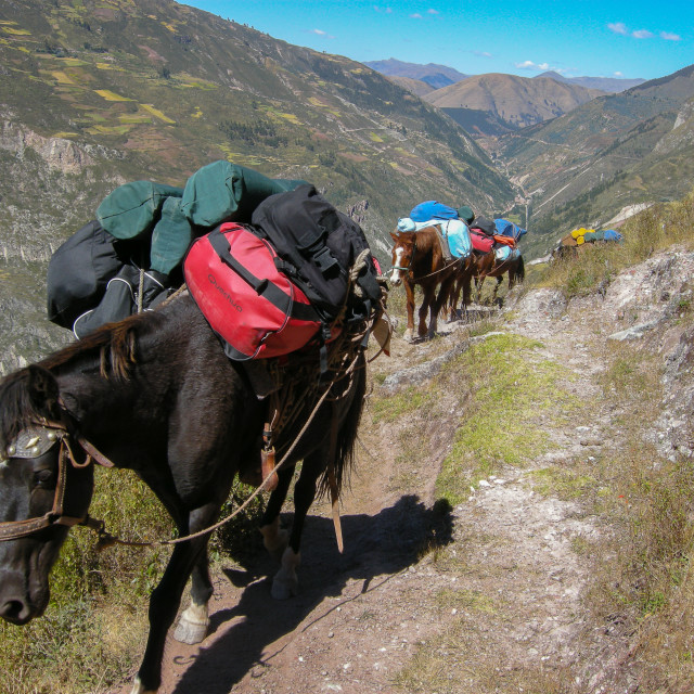 """Pack Hourse on Trek"" stock image"
