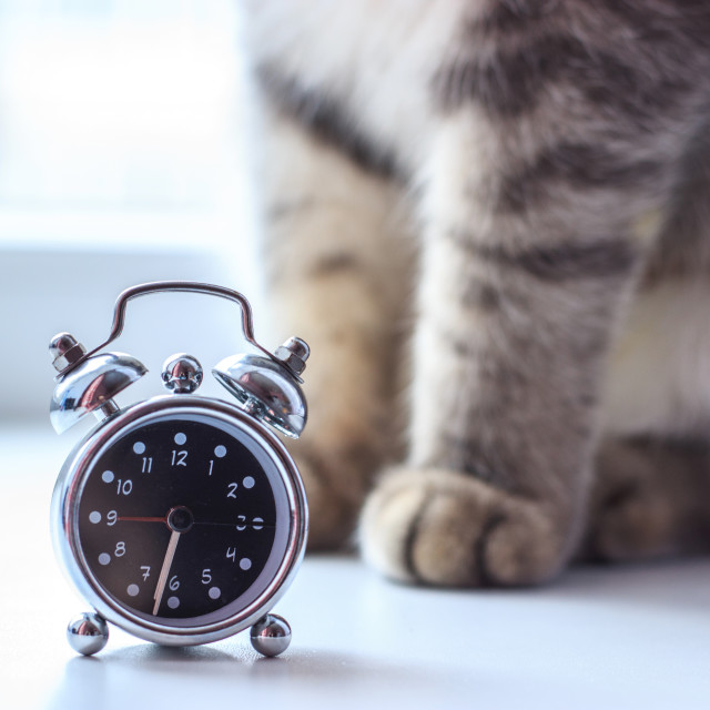 """""""Clock face with cat paws"""" stock image"""
