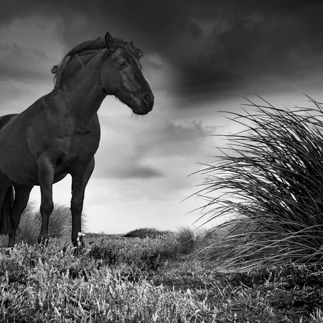 """Horse on Sealion Island"" stock image"