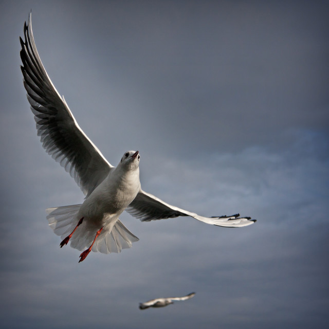 """The Seagull"" stock image"