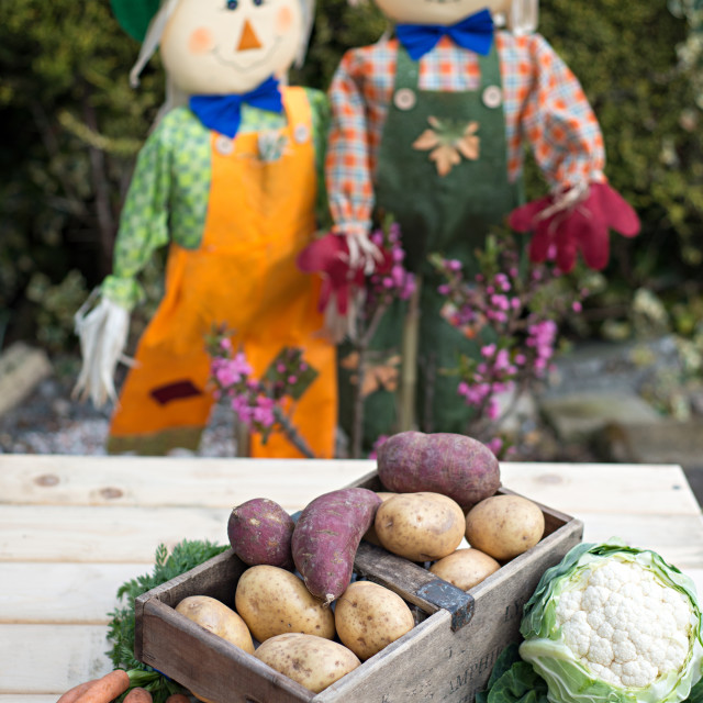 """Vegetables and Scarecrows"" stock image"