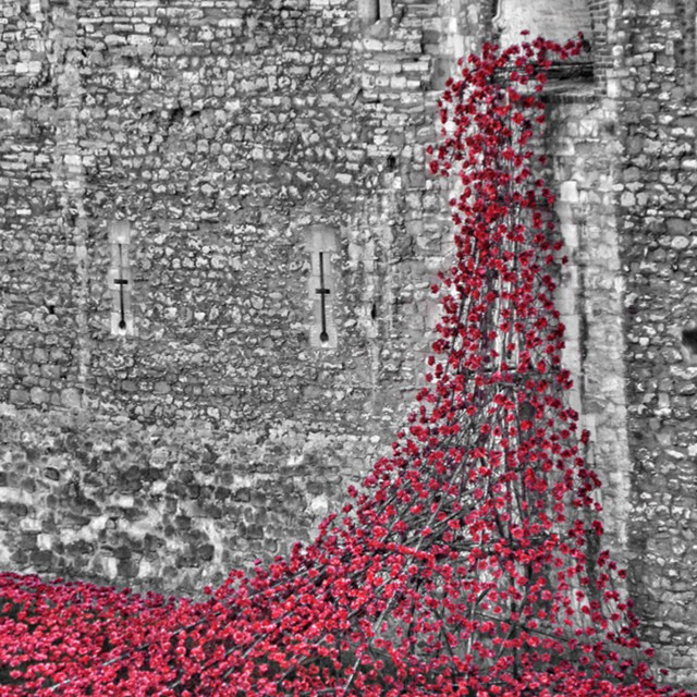 """""""Tower of London Poppies"""" stock image"""