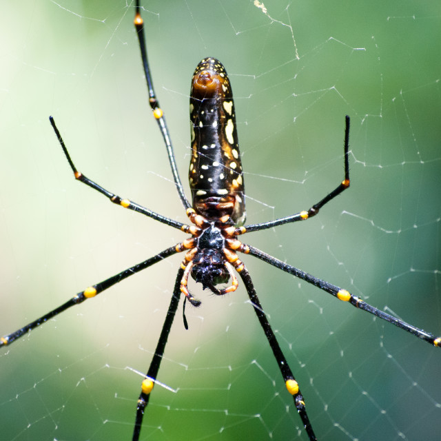 """""""Spider accuracy"""" stock image"""