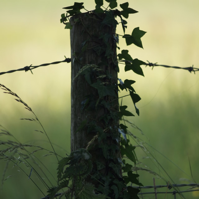 """Fence Post 2"" stock image"