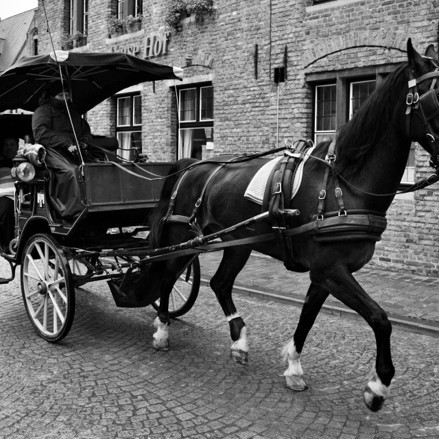 """Horse and carriage."" stock image"