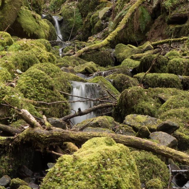 """Moss covered Waterfall"" stock image"