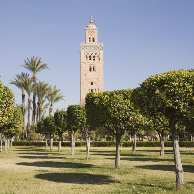 """Koutoubia Mosque and orange groves Marrakech"" stock image"