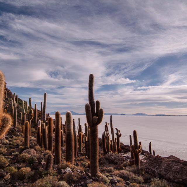"""""""Salar de Uyuni"""" stock image"""
