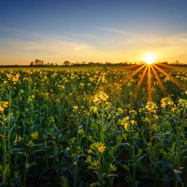 """Sunset Over the Sunny Field Colour of Spring"" stock image"