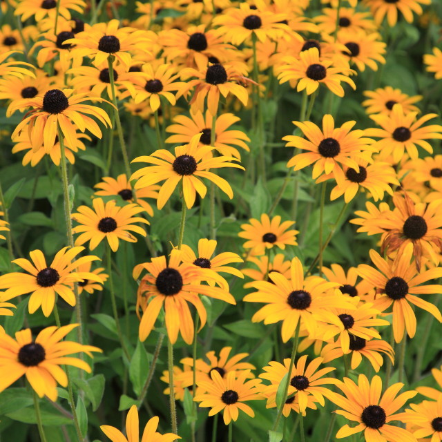 """Carpet of flowers"" stock image"