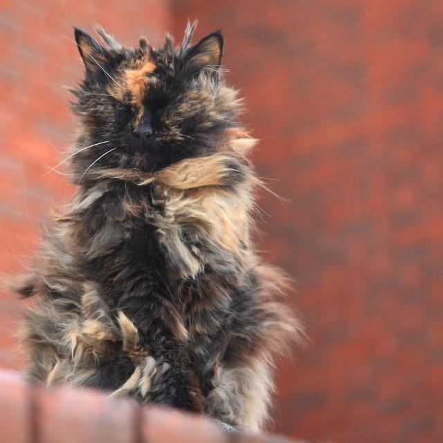 """Hairy cat"" stock image"
