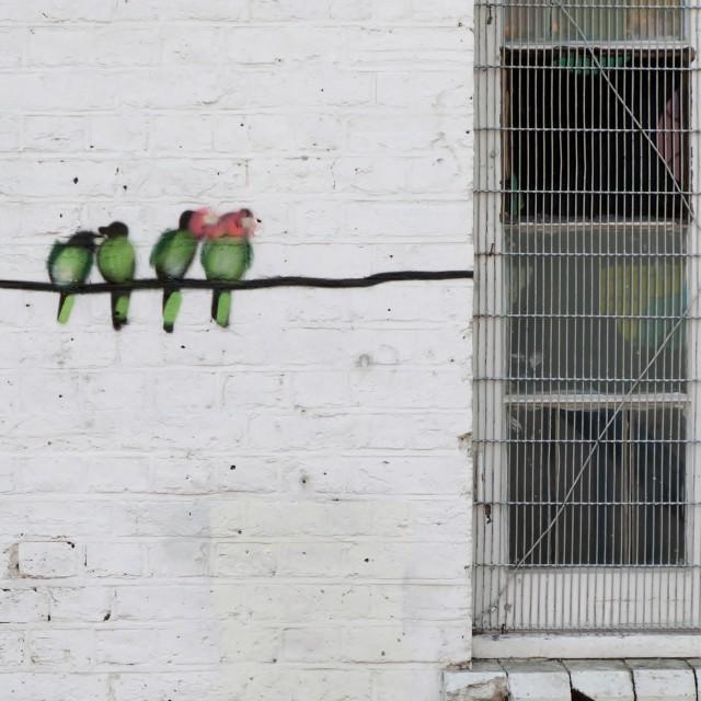 """Birds on Wall"" stock image"
