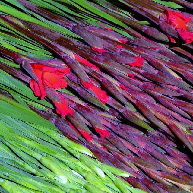 """Columbia Road Flower Market"" stock image"