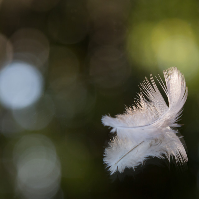 """Light as a feather"" stock image"