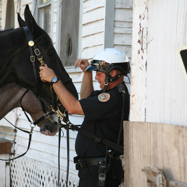 """Police Horses"" stock image"