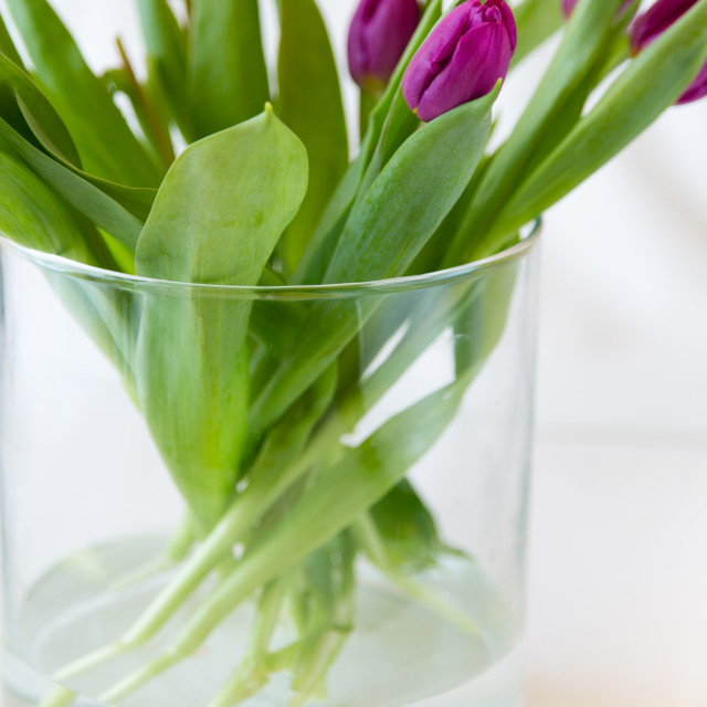 """""""Purple tulips in a glass vase"""" stock image"""