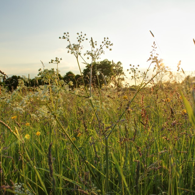 """Through the meadow grass"" stock image"