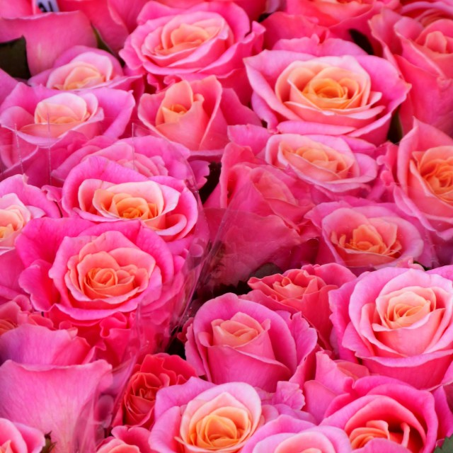 """""""Roses for Sale, Columbia Road Market"""" stock image"""