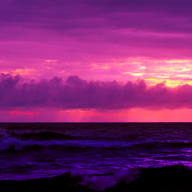 """A Purple Radiance"" stock image"
