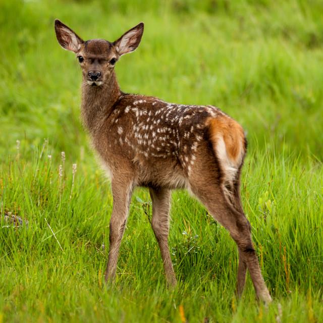 """Bambi"" stock image"