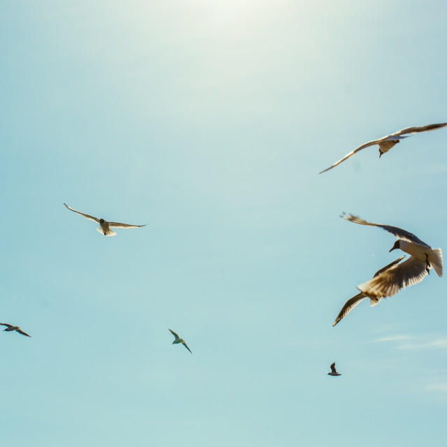 """Birds Flying In The Sky"" stock image"