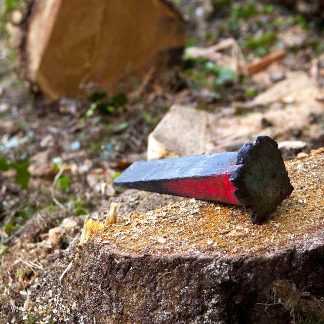 """Woodcutter work"" stock image"