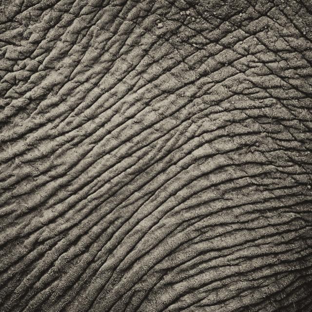 """""""Elephant skin"""" stock image"""
