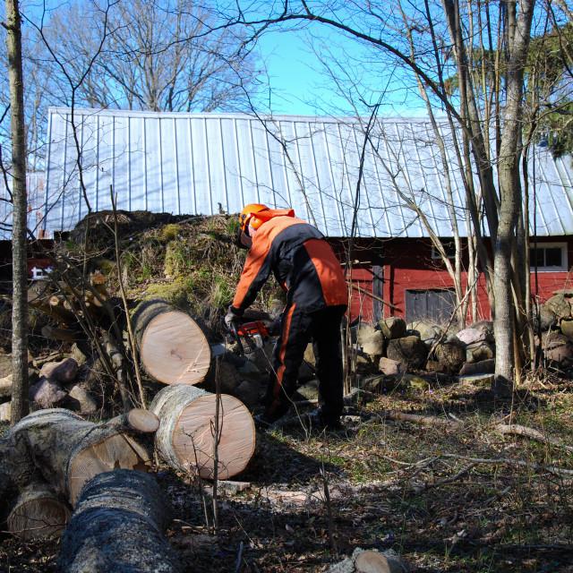 """Lumberjack at a wind fallen tree"" stock image"