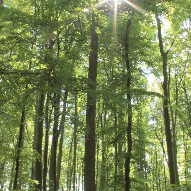 """""""Sunlit woodland"""" stock image"""