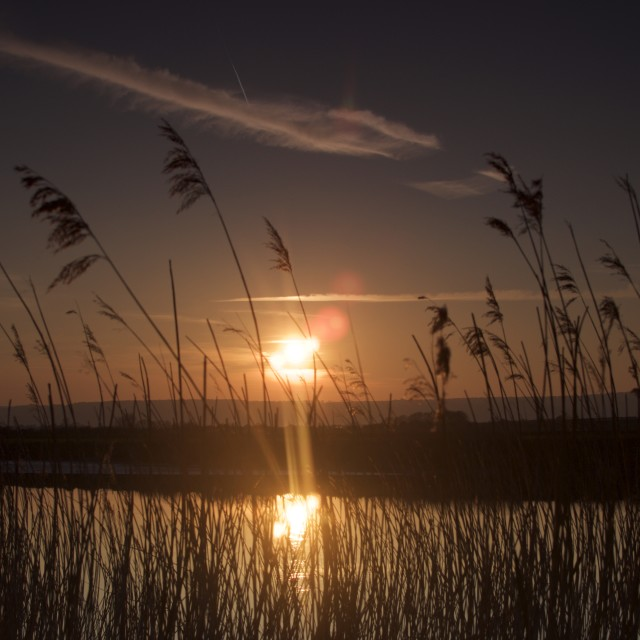 """River Reed Sunset"" stock image"