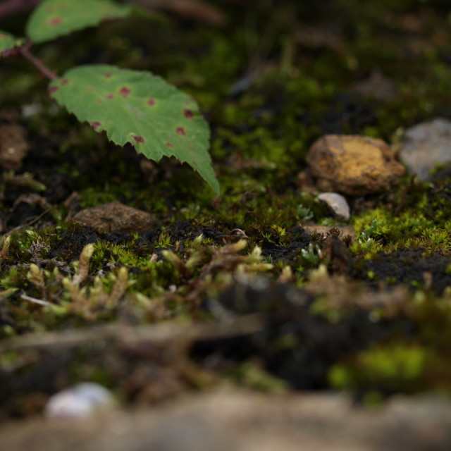 """""""Soil and moss"""" stock image"""