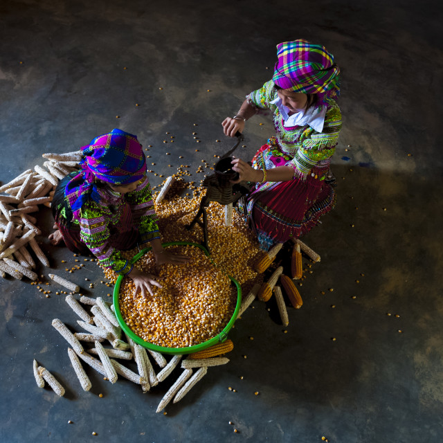 """Hmong Little Girls in traditional clothes separating the corn grains from the cobs with manual equipment"" stock image"