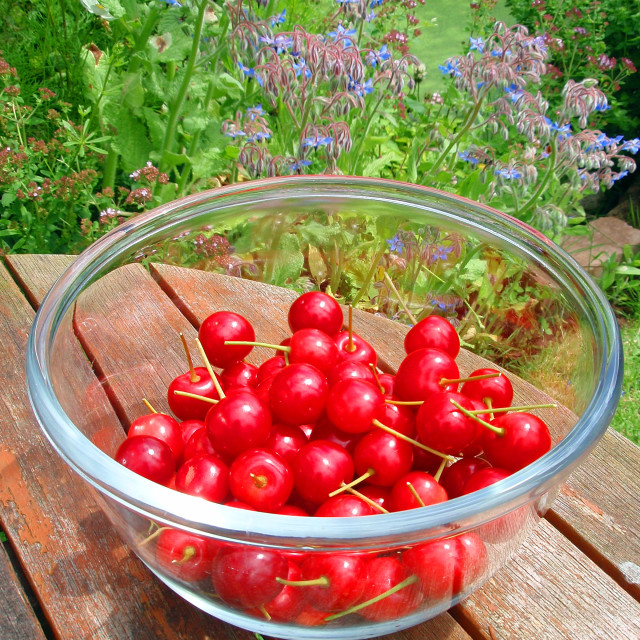 """""""A bowl of cherries"""" stock image"""