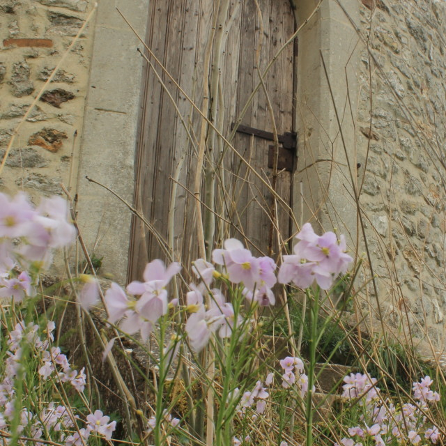 """Cuckooflowers by the tower"" stock image"