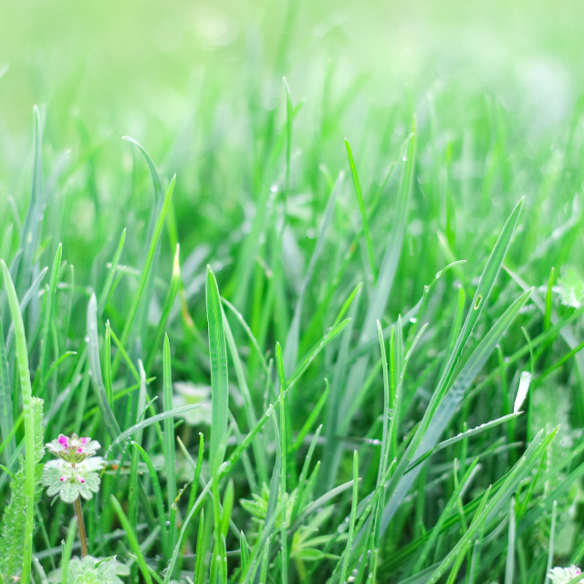 """Fresh green grass with flowers"" stock image"