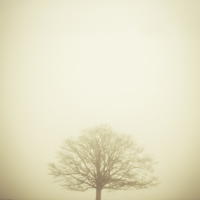 """A Lone Tree In Fog Landscape"" stock image"
