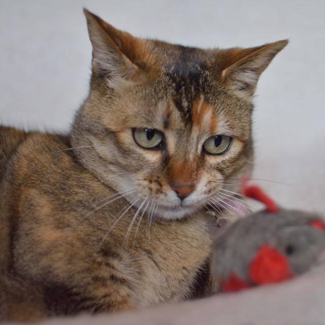 """Thoughtful Cat"" stock image"